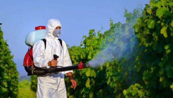 ارخص شركة رش مبيدات بالخبر