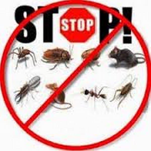 مكافحة حشرات حي السفن