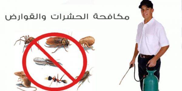 مكافحة حشرات حي الراكة