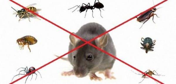 مكافحة حشرات حي الخزامى